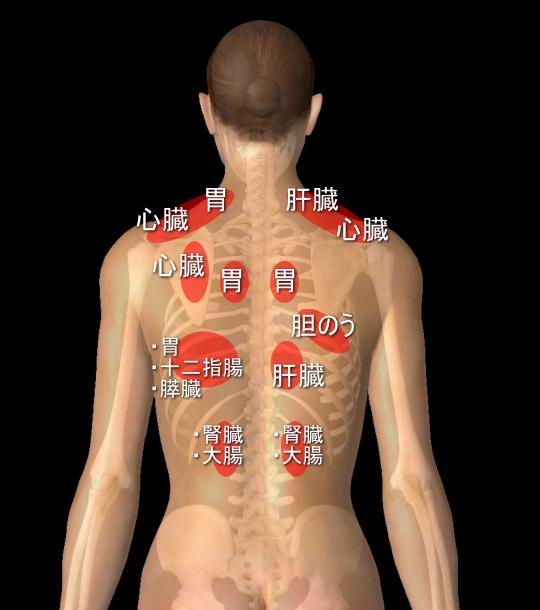 内臓と肩や背中の痛みの関係