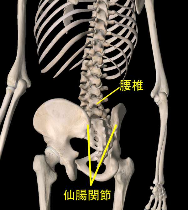 腰椎と仙腸関節