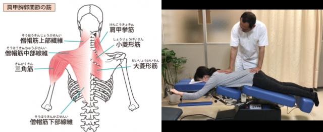 背骨に周りの筋肉